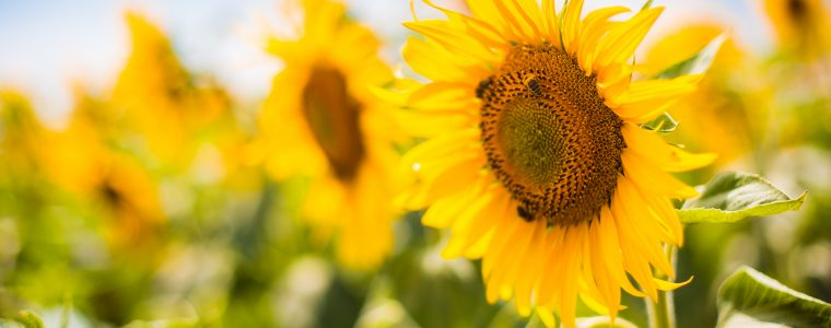 Gedanken zum Sommer - Martina Dittmann