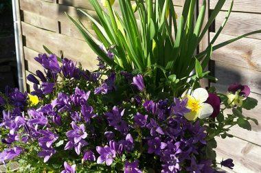 Und der Frühling kommt doch!